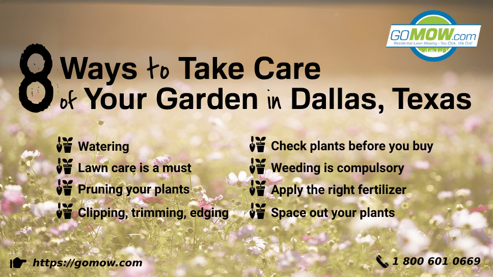 8-ways-to-take-care-of-your-garden-in-dallas-texas