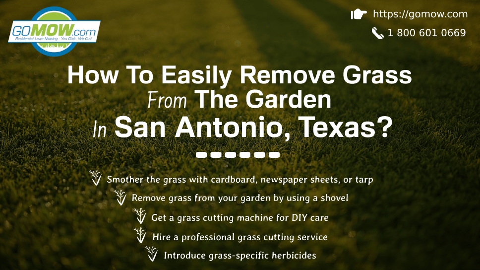 how-to-easily-remove-grass-from-the-garden-in-san-antonio-texas