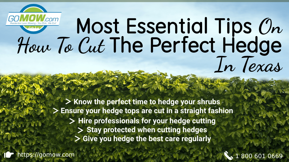 most-essential-tips-on-how-to-cut-the-perfect-hedge-in-texas