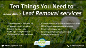 ten-things-you-need-to-know-about-leaf-removal-services