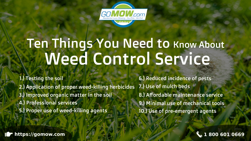 ten-things-you-need-to-know-about-weed-control-service