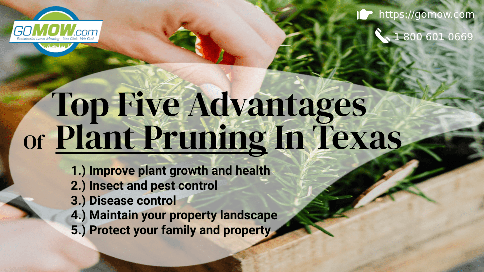 top-five-advantages-of-plant-pruning-in-texas