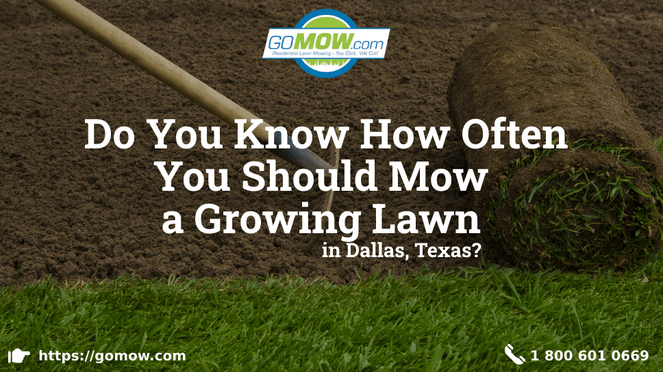 do-you-know-how-often-you-should-mow-a-growing-lawn-in-dallas-texas